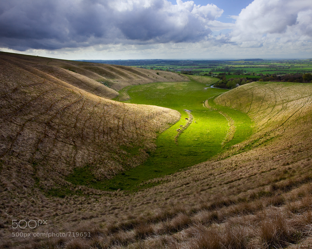 Photograph Cattle in the Manger, Uffington, Oxfordshire by Tim Smalley on 500px