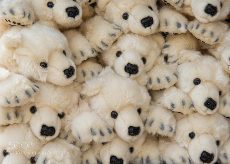 Photograph Pile of Polar Bears by Glenn Nagel on 500px