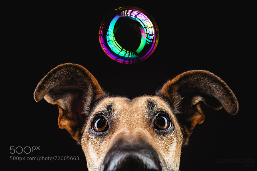 Photograph Dreams by Elke Vogelsang on 500px
