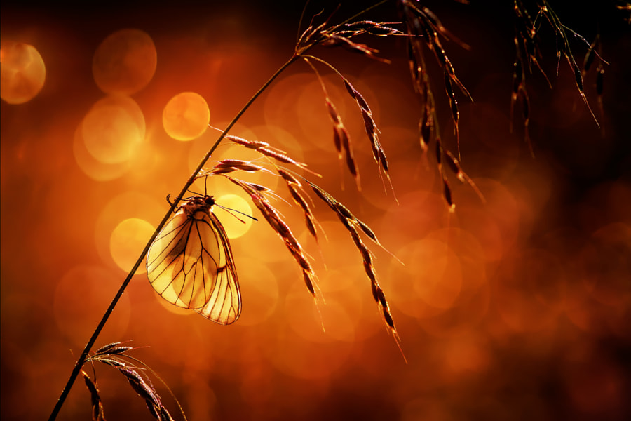 Warm by Steyaert Didier on 500px.com