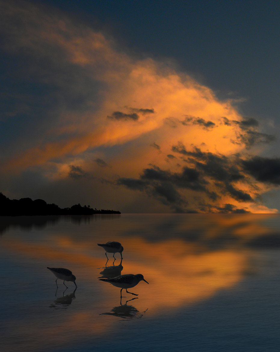 Photograph 2231 by peter holme iii on 500px