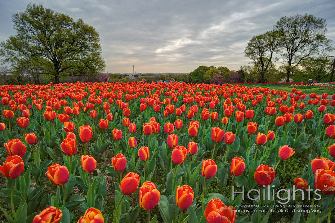 Photograph Tulip fields and monuments far afield by Hai Ng on 500px