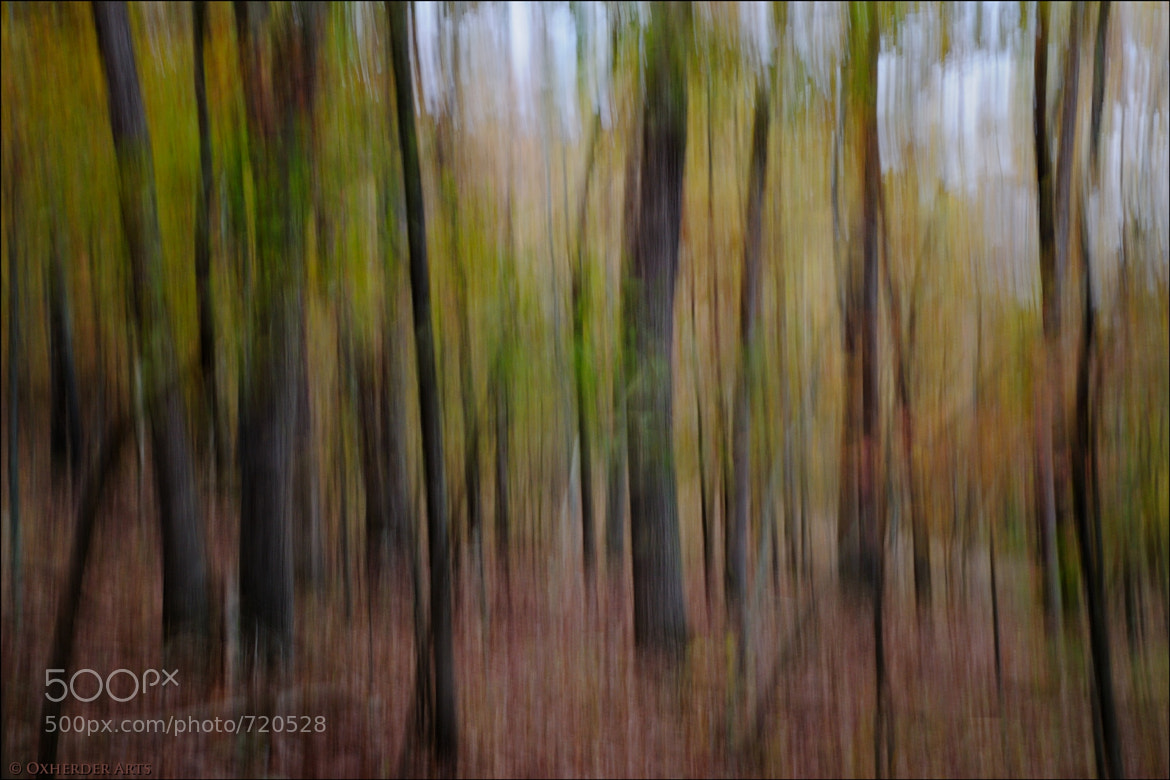 Photograph Impression: Ozark Forest by Don J Schulte on 500px