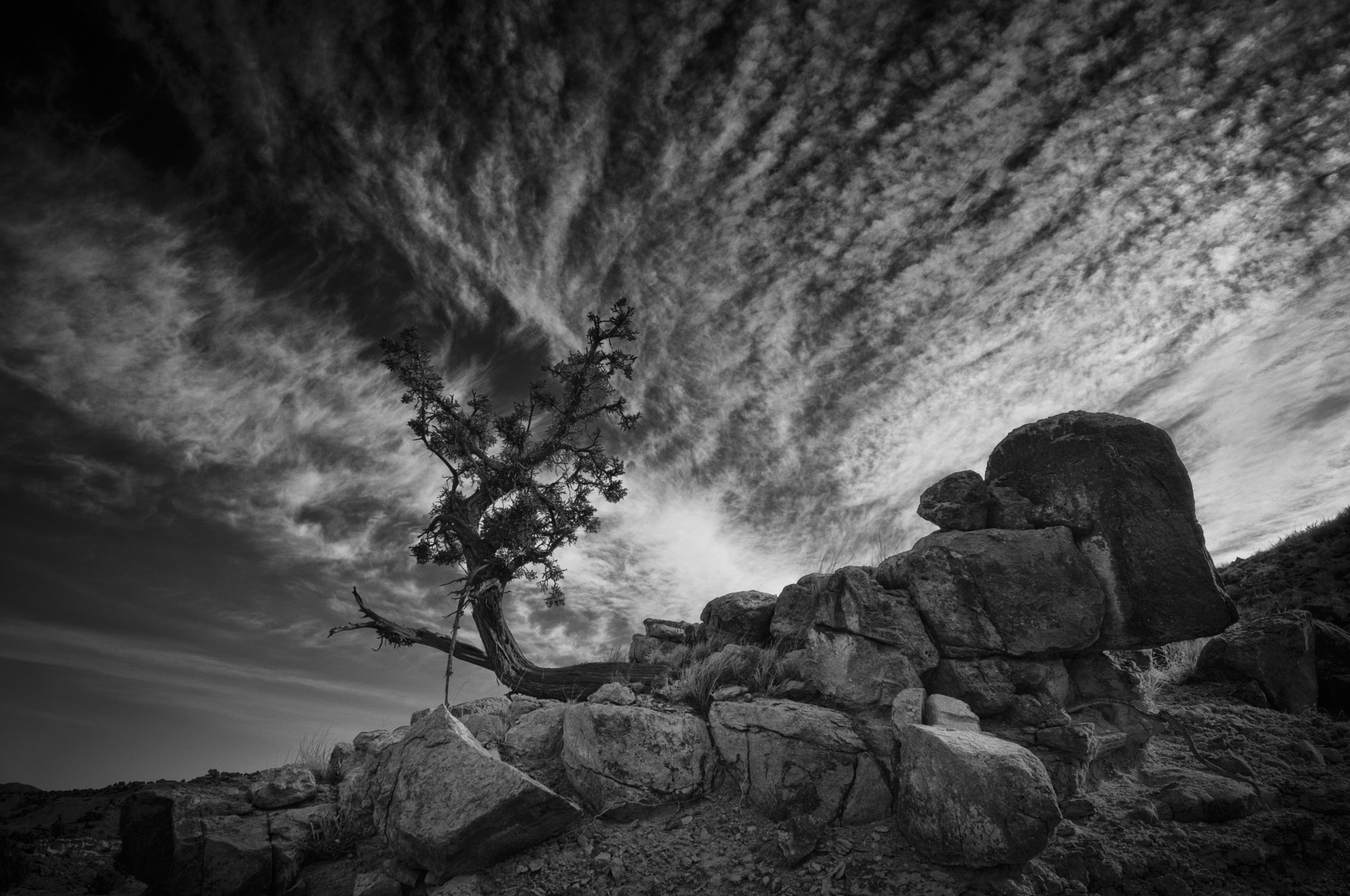 Photograph Lone Tree by Jory Vander Galien on 500px