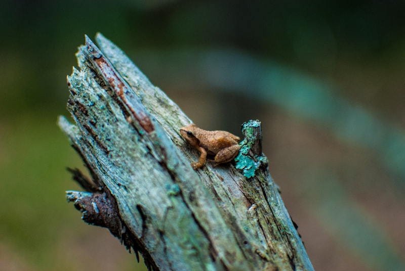 Photograph Frog on a Log by Jesse Kline on 500px