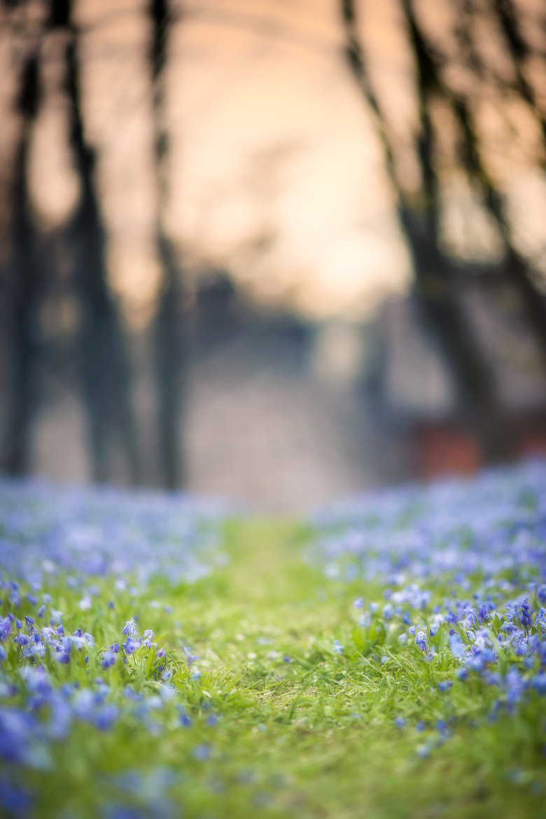 Photograph On the path of May by Jaakko Paarvala on 500px