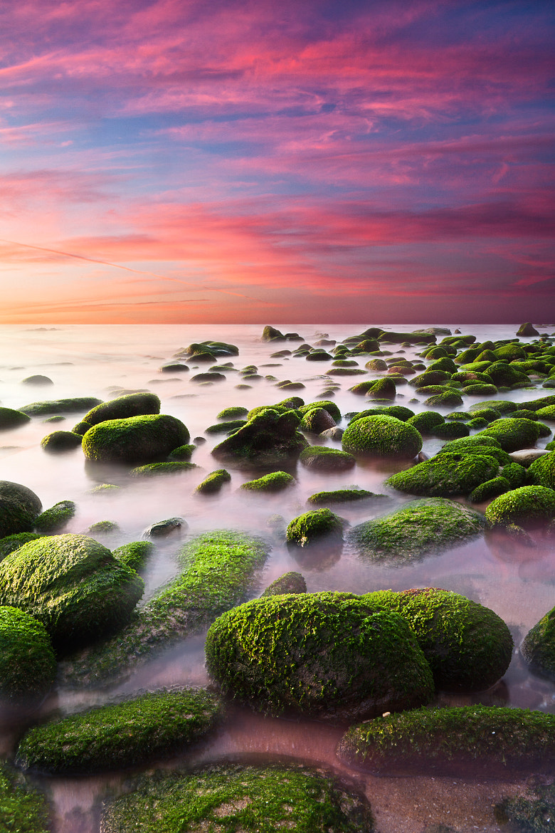 Photograph Color harmony by Jorge Maia on 500px