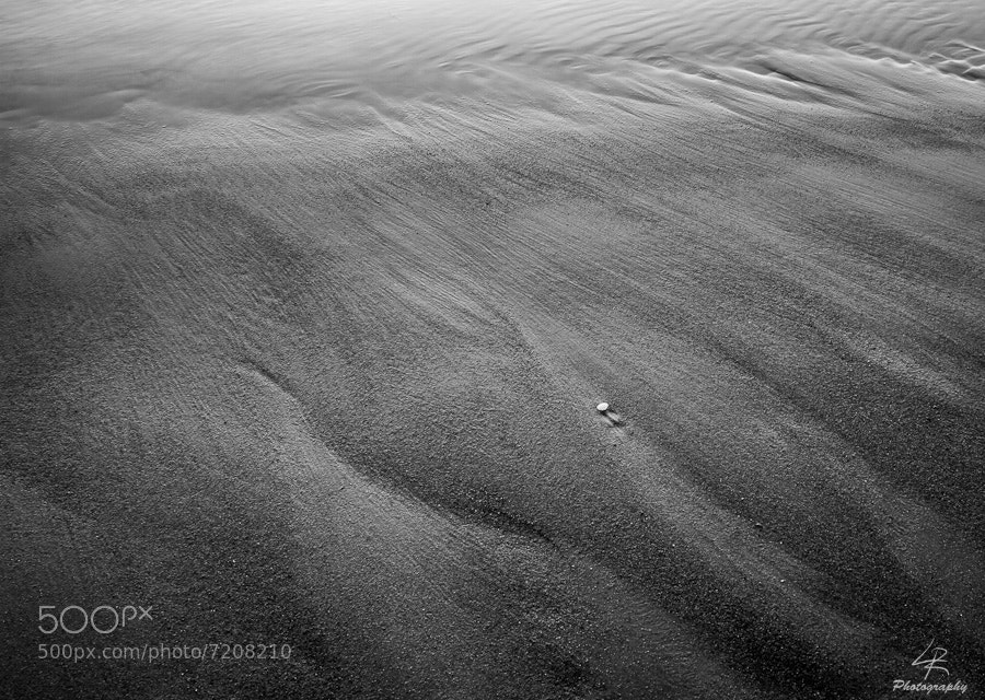 Photograph Lonely Shell by Leo Rantala on 500px