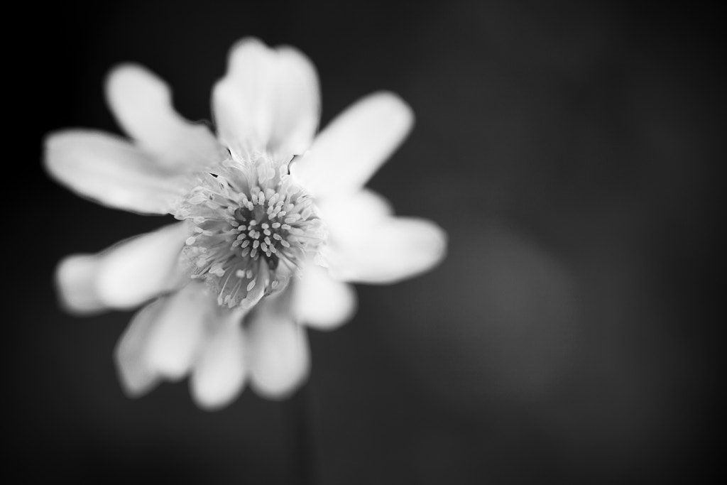 Photograph Black (and white) Beauty by Philip O'Toole on 500px