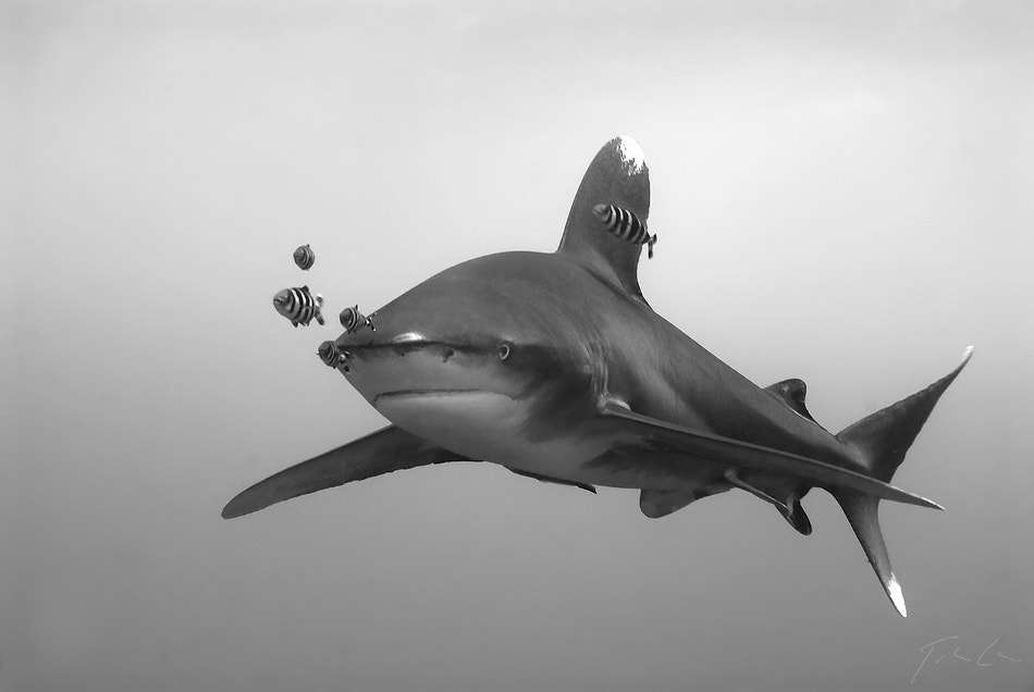 Photograph Longimanus by Csaba Tökölyi on 500px