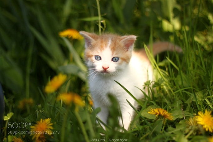 Photograph Kitty by Ira Chyzhyk on 500px