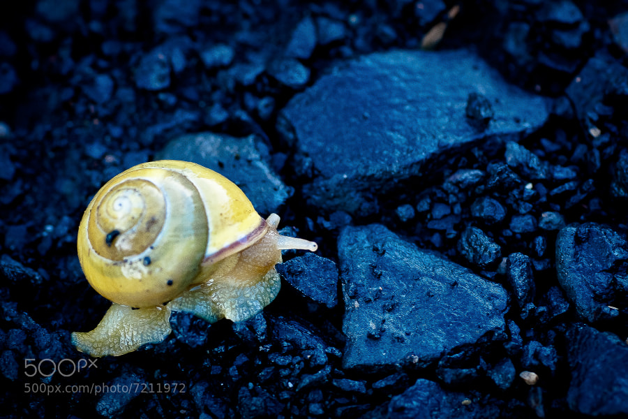 Photograph L'escargot jaune by Damien De Assunção on 500px