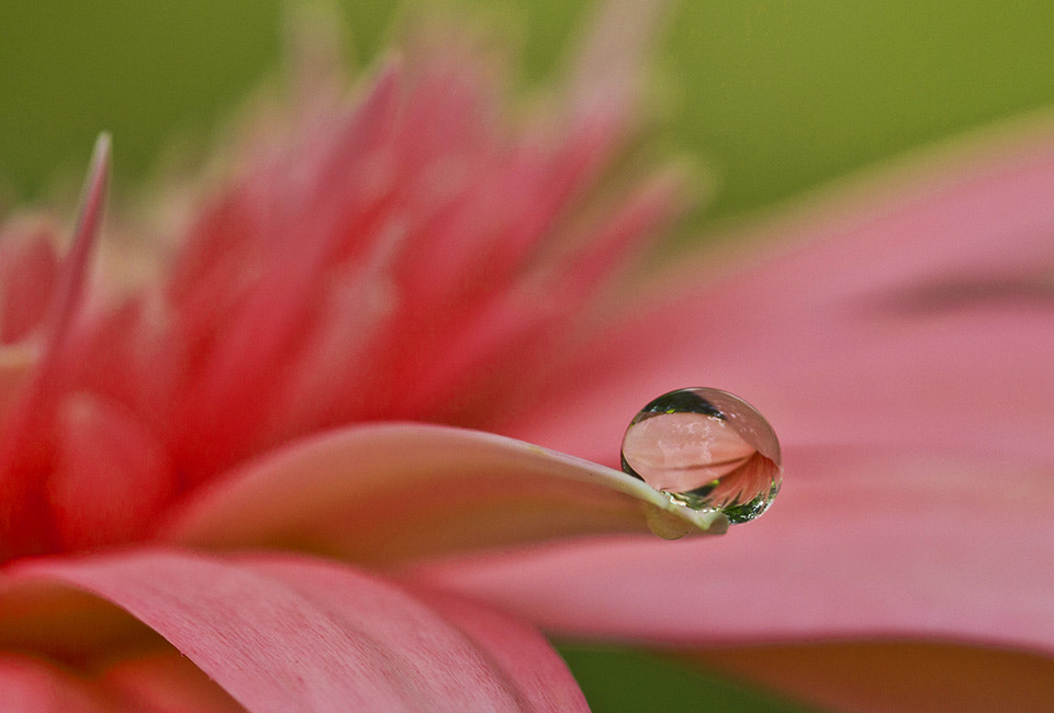 Photograph Love in a drop of dew... by Citra Hernadi on 500px