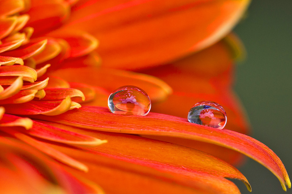 Photograph Reflection in the dew..... by Citra Hernadi on 500px