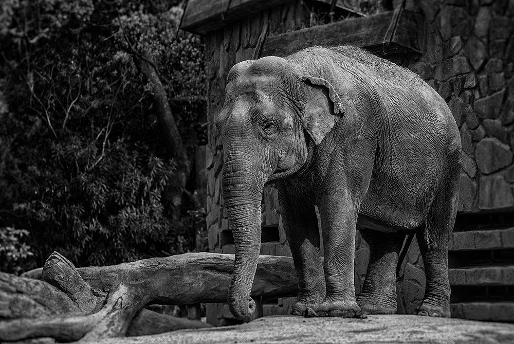 Photograph The Lonely Elephant by Jason McDonald on 500px