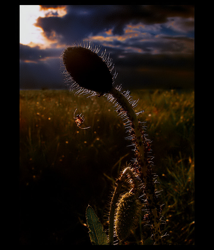 Photograph Romantic ( Spider Dreams )  by EMERALD WAKE © on 500px