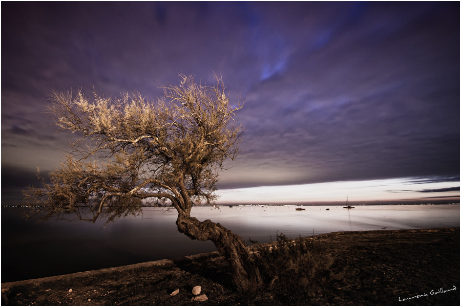 Photograph Mystery tree by Laurent Gaillard on 500px
