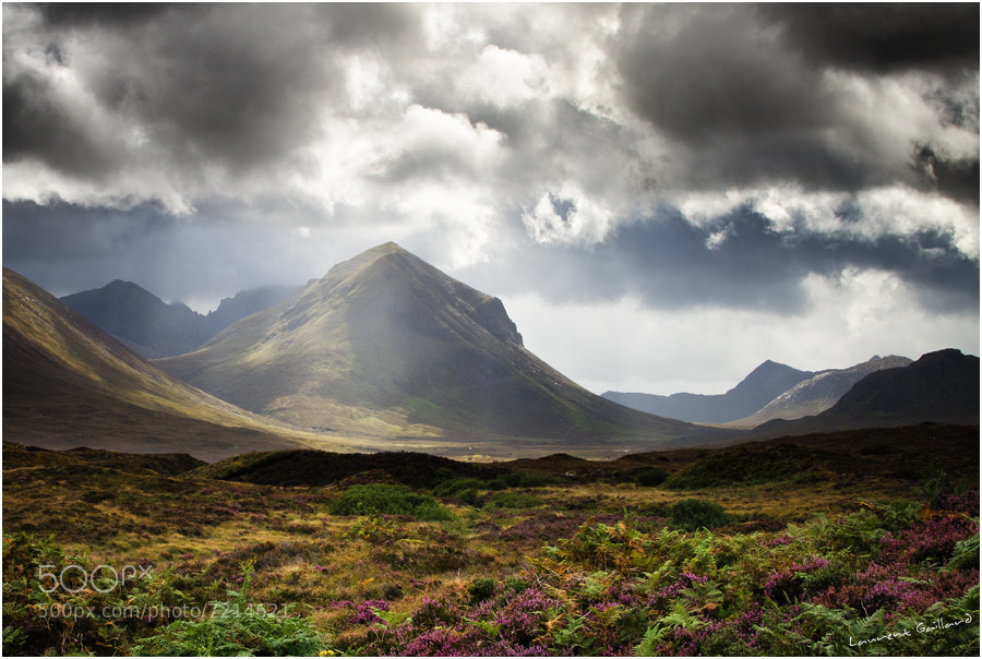 Photograph Light on heather by Laurent Gaillard on 500px