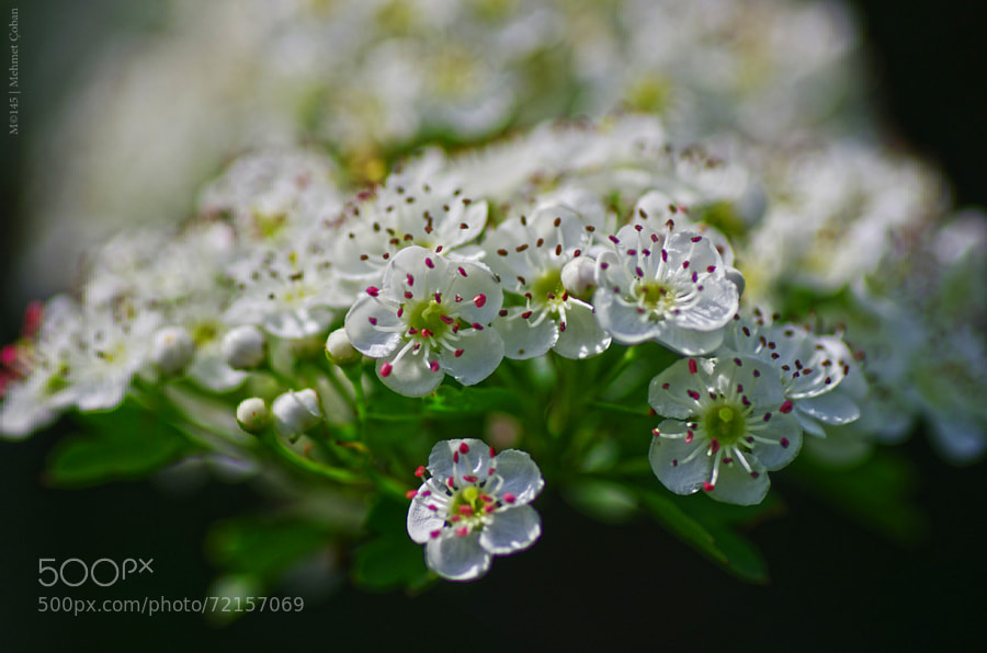 Photograph Top white by Mehmet Çoban on 500px
