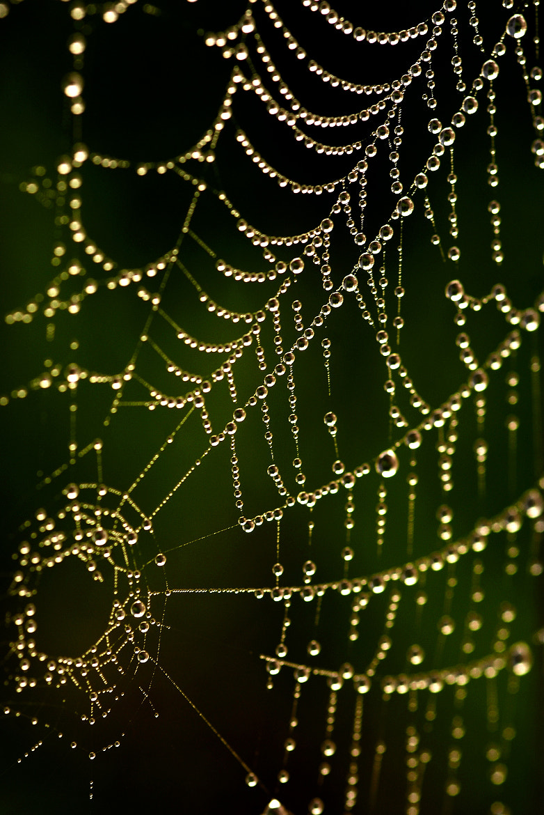 Photograph Pearls by Andy 58 on 500px