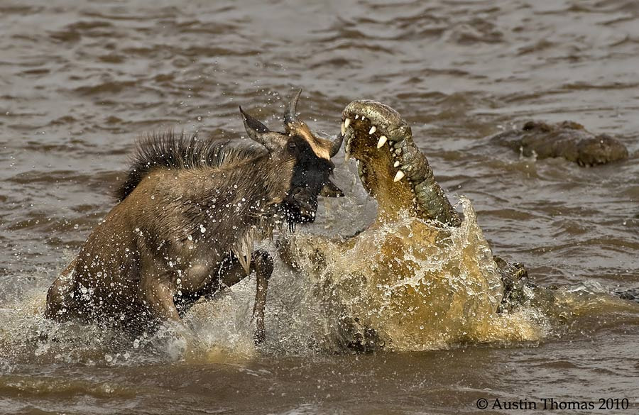 Crocodile and the Beest