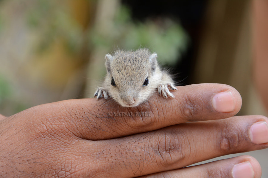 Photograph STUART LITTLE .... by Vatsal Patel on 500px
