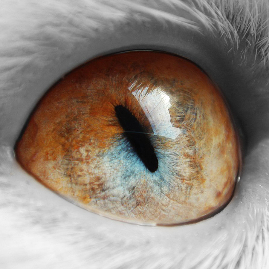 Photograph Eye of the cat by Alexander Lukinsky on 500px