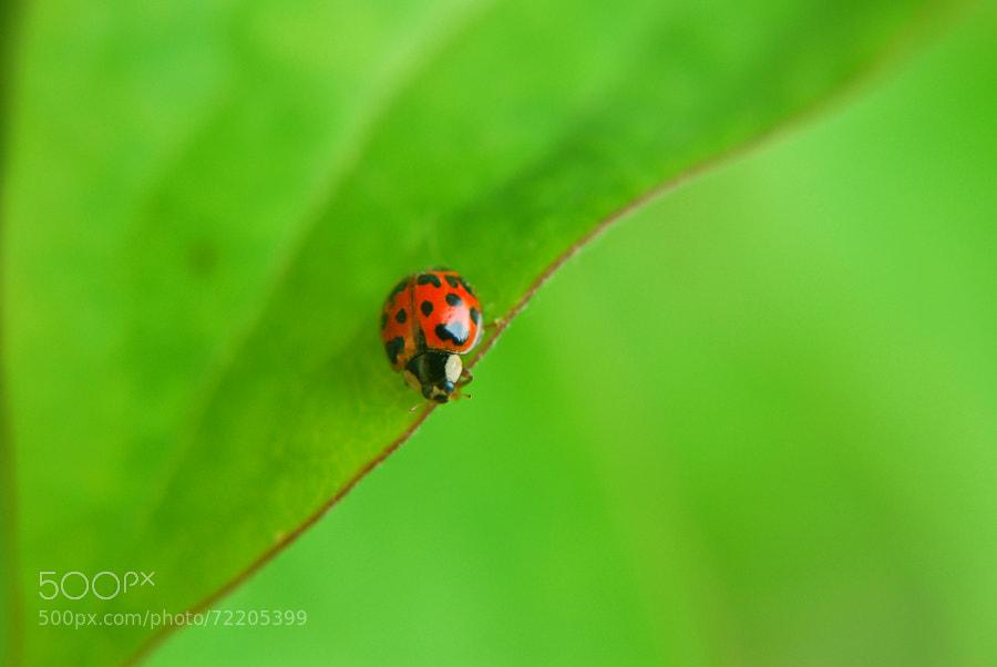 Ladybug In Green