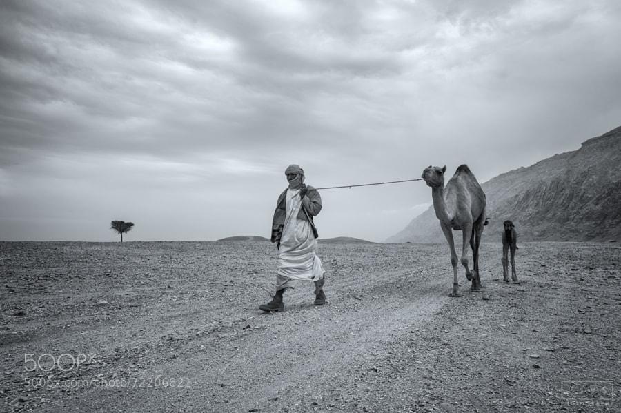 This Desert Life