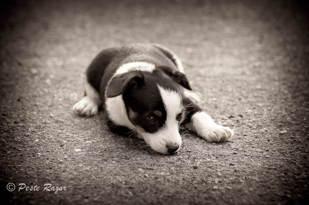 Photograph Lonely Dog by Peste Razor on 500px