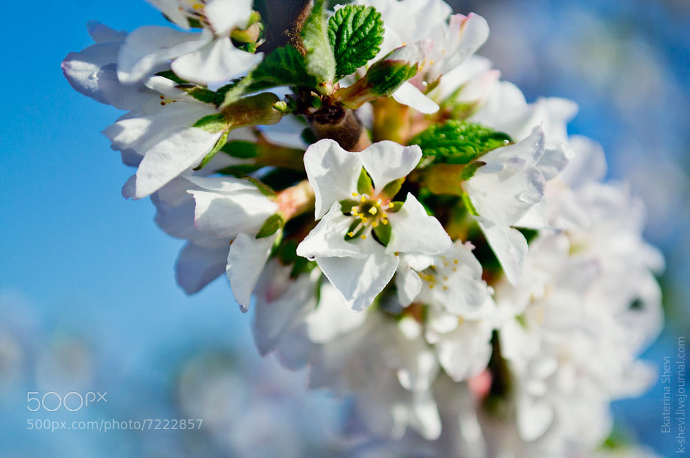 Photograph Spring by Ekaterina Shevi on 500px