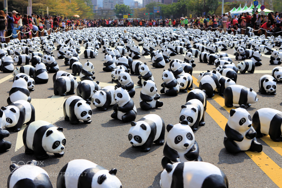 Photograph Panda by David Chen on 500px
