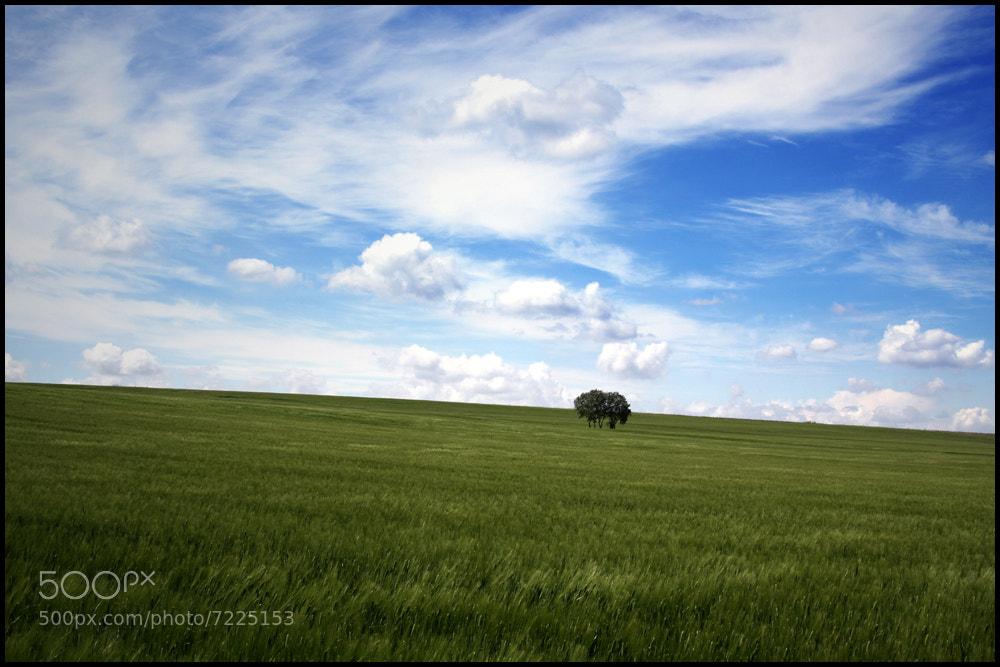 Photograph Provence by David Bénézech on 500px