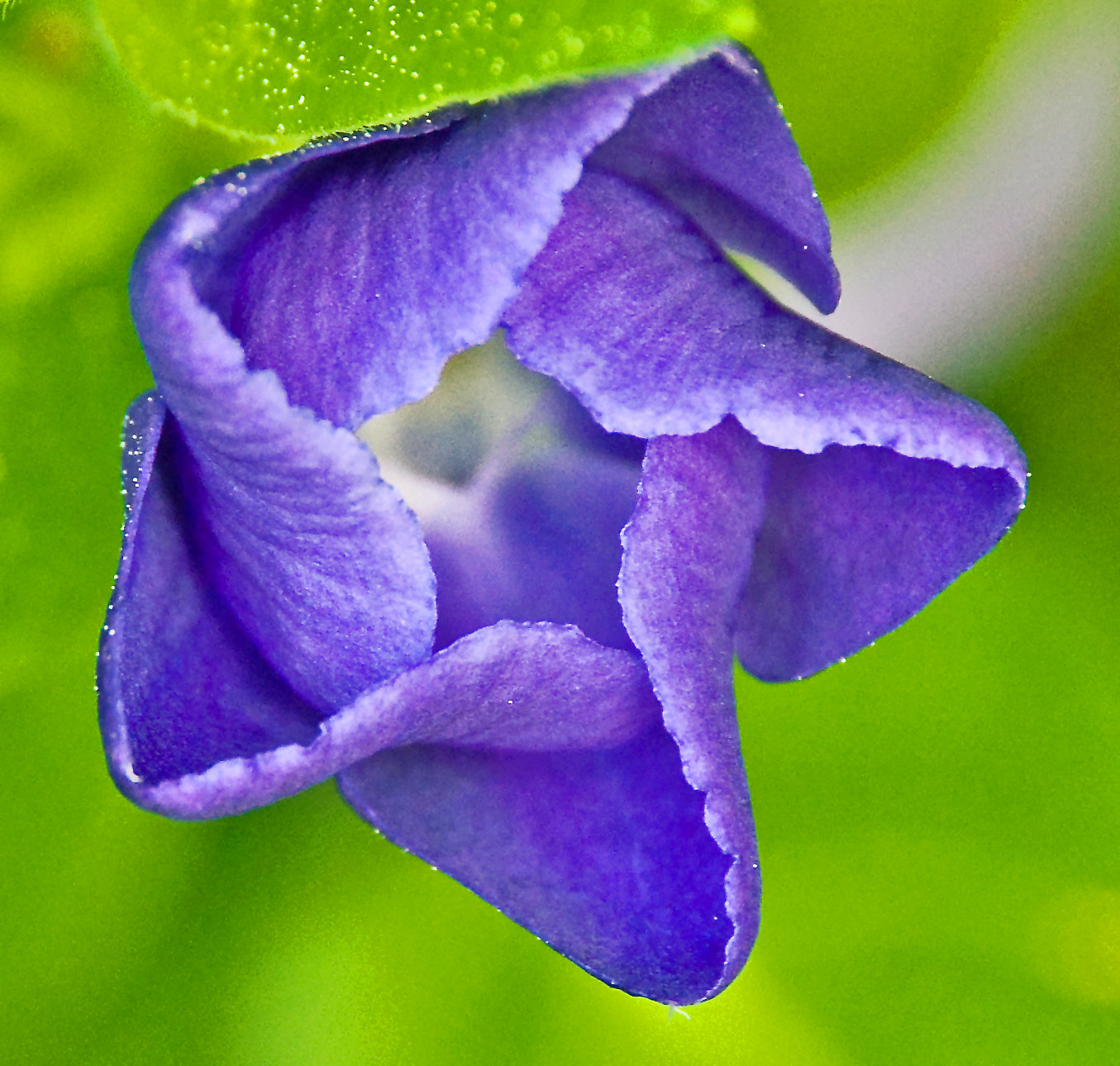 Photograph Vinca, Opening Today by Mark Luftig on 500px