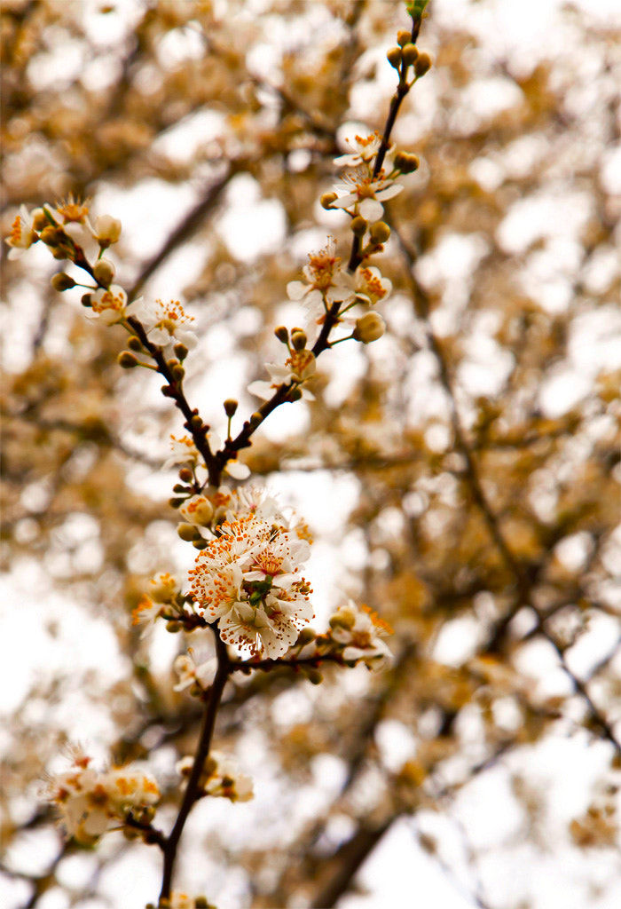 Photograph White of spring by Ali Taheri on 500px