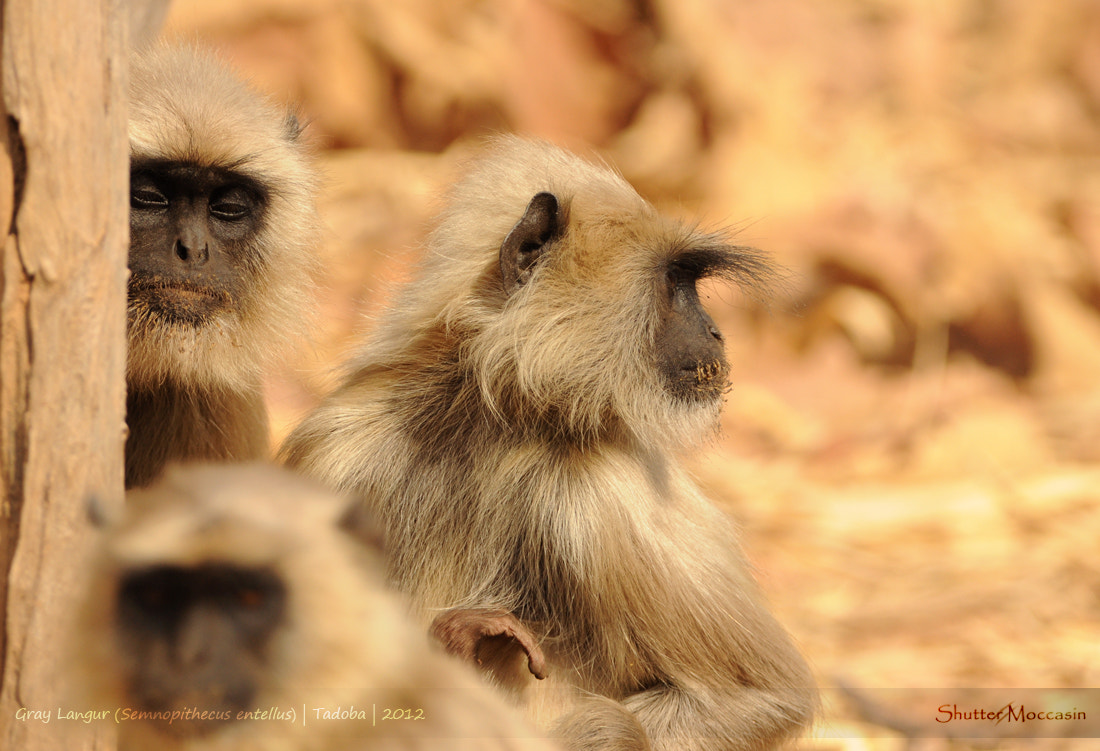 Photograph Langurs lost in thought by Nishant Shah on 500px