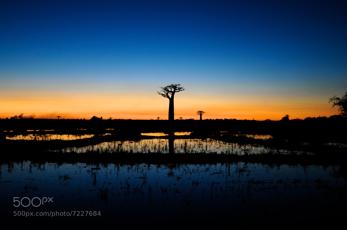 Photograph Baobab after sunset by Trevor Cole on 500px