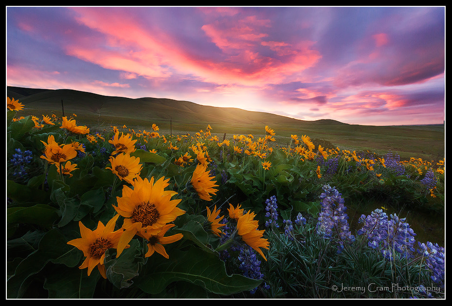Photograph Here Comes the Sun... by Jeremy Cram on 500px