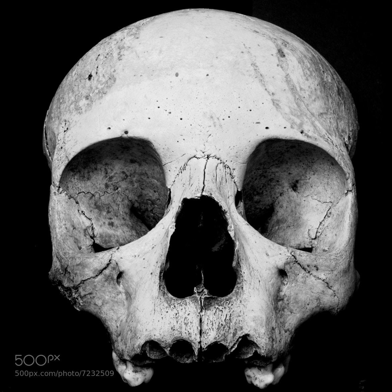 Photograph Skully by Emmanuel Dubois on 500px