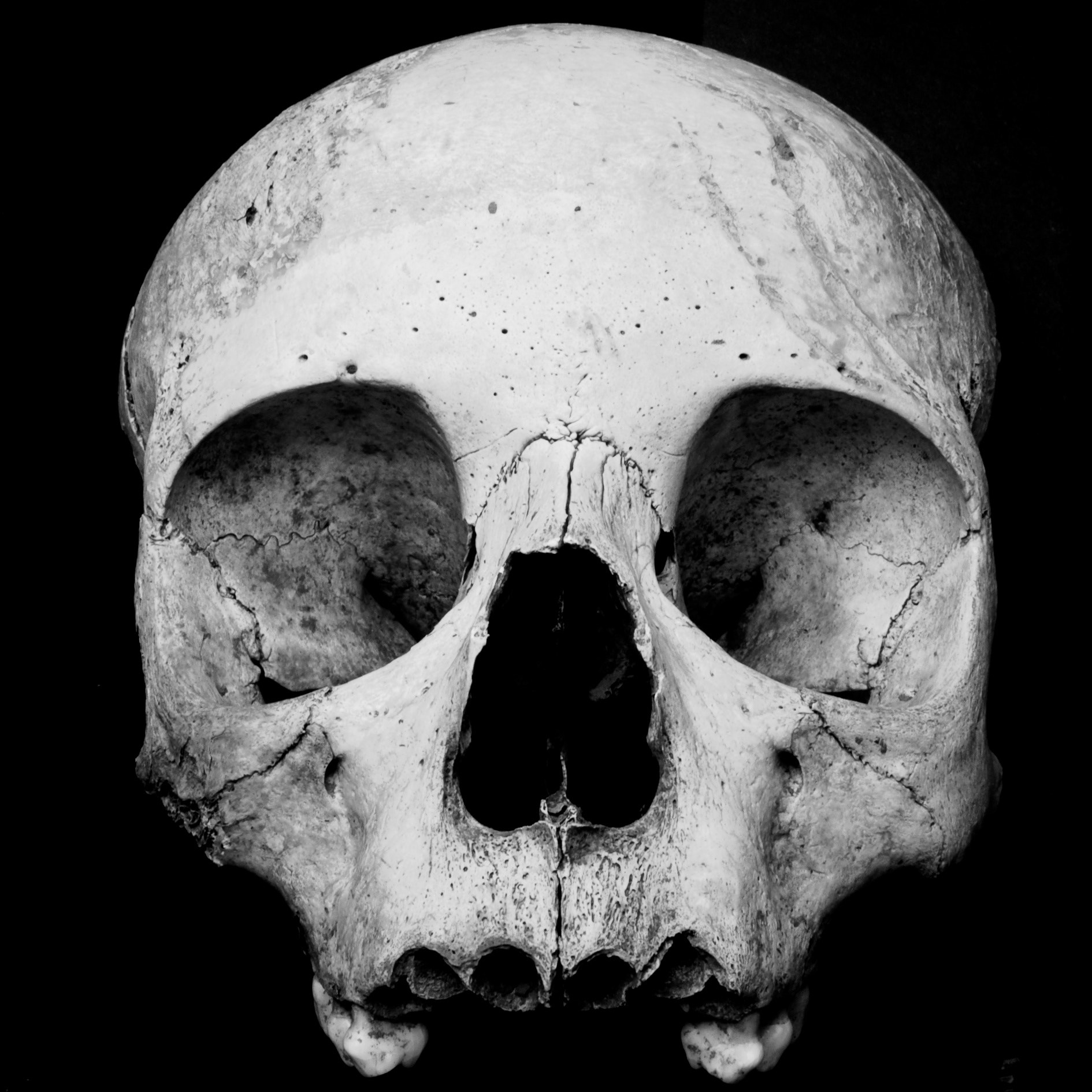 Photograph Skully by Emmanuel Dubois on 500px