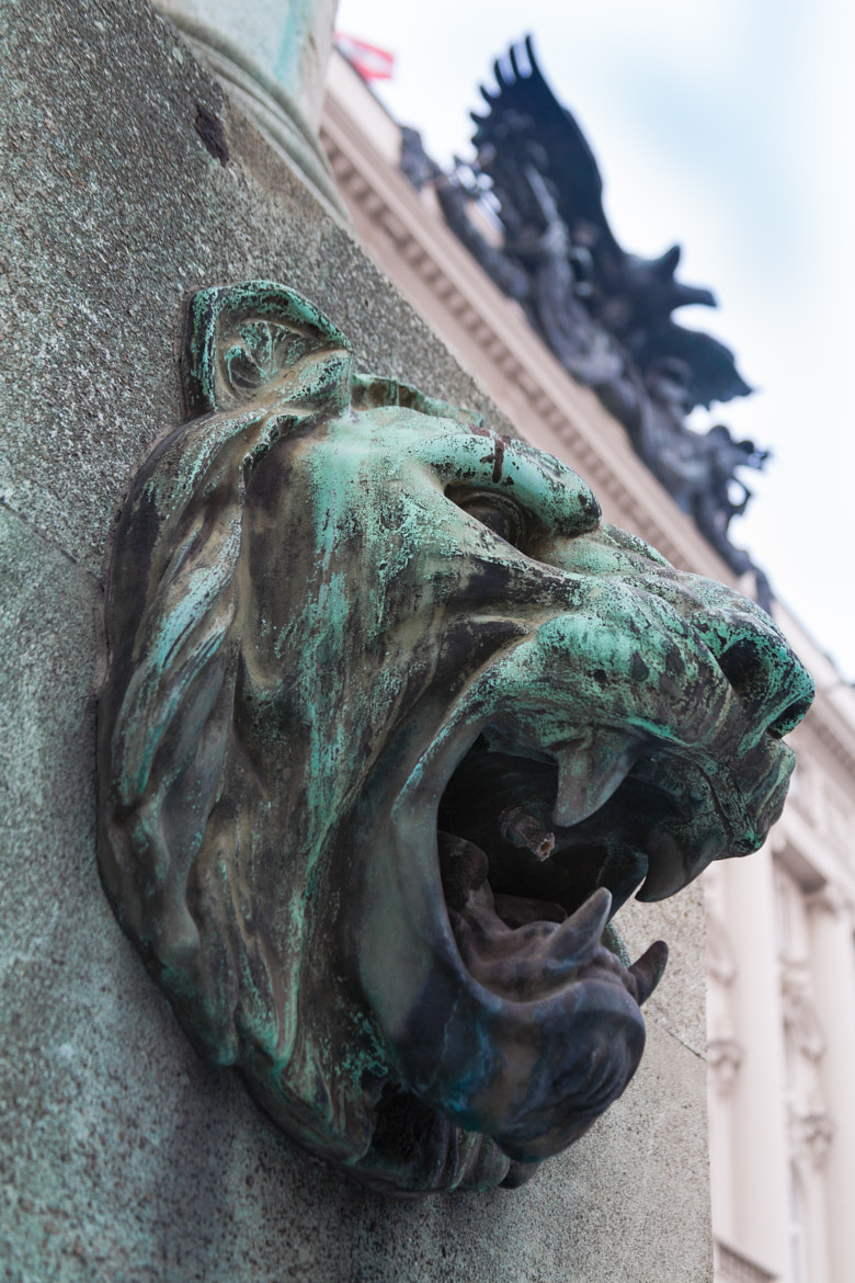 Photograph Lion and Eagle by Christopher DeCoro on 500px