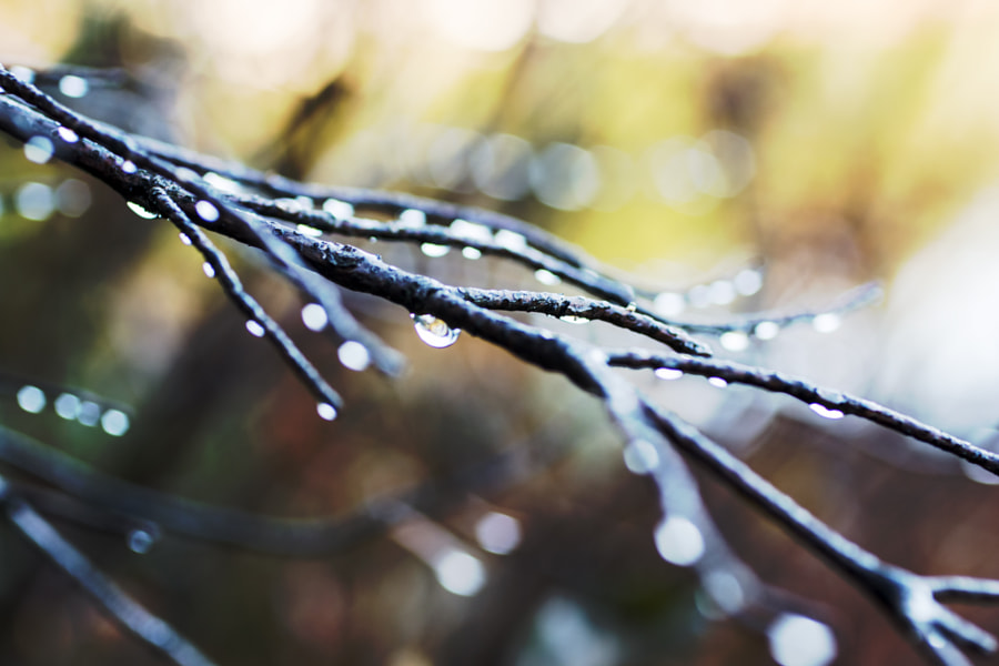 Rainy Branches by Catherine Dotson on 500px.com