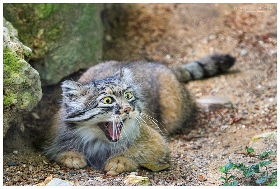 Aaaaaaaaaahhhh!! by Tobi K on 500px.com