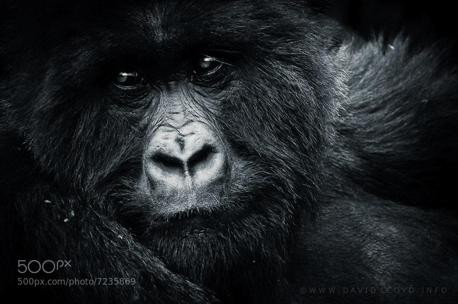 Photograph Amahoro by David Lloyd on 500px