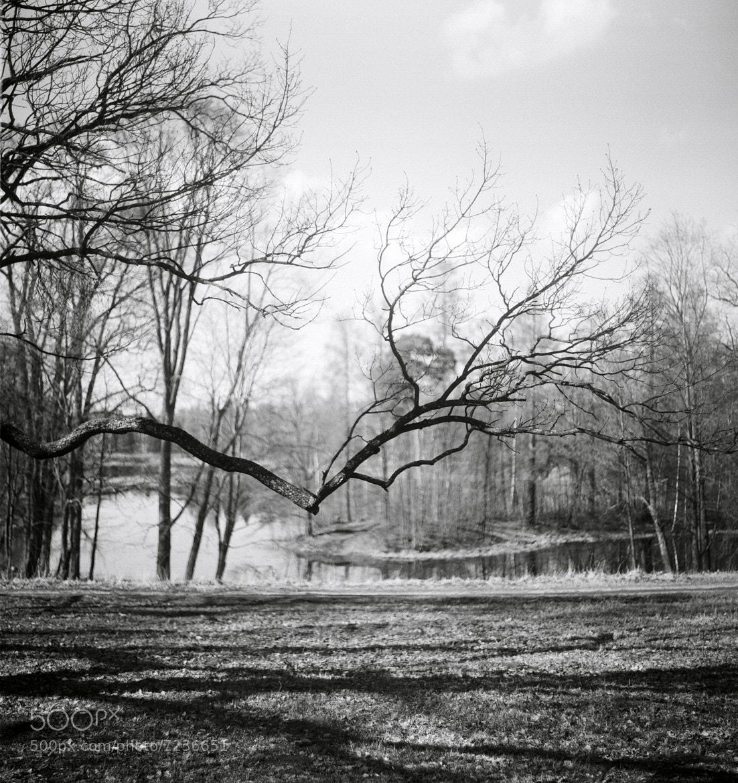 Photograph Gatchina by Valerii FEDOROV on 500px