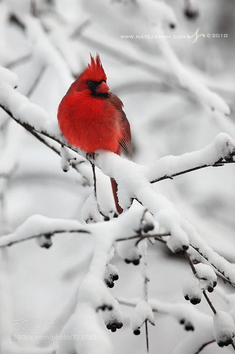 Photograph Snowy Perch by Nate Zeman | natezeman.com on 500px
