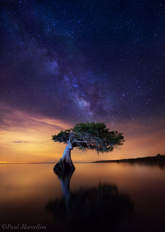 Photograph Celestial Cypress by Paul Marcellini on 500px