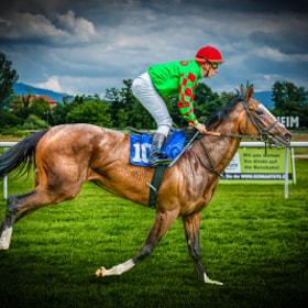 Pferderennen | Horse racing