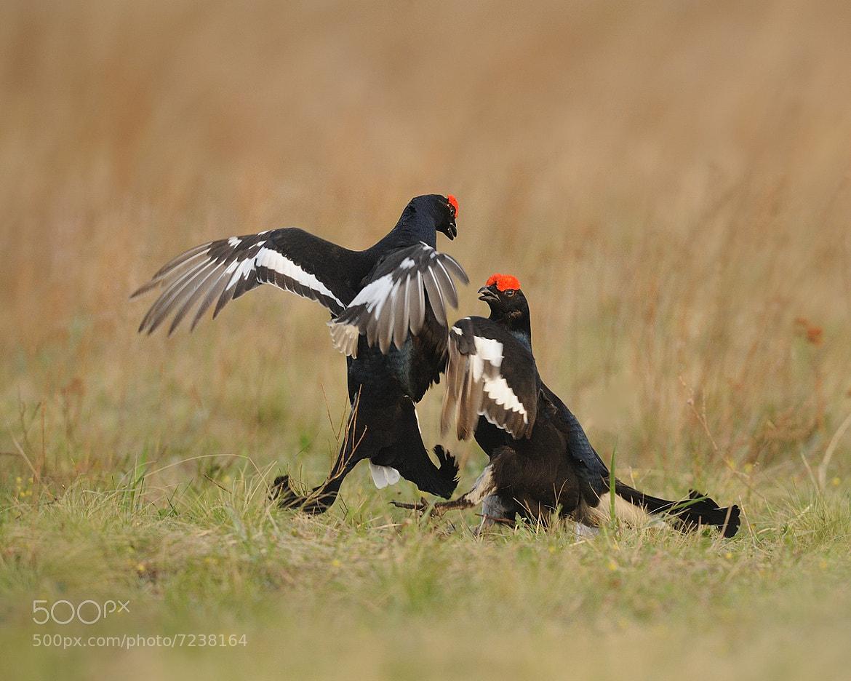 Photograph Fight club by Vladimir Yezhov on 500px