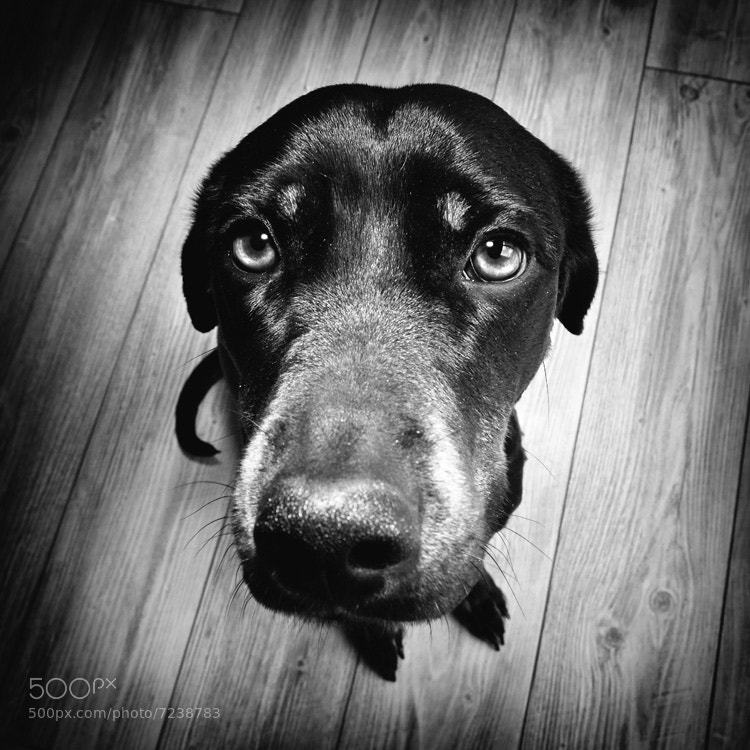 Photograph Big nose, little paws by Laurent Gaillard on 500px
